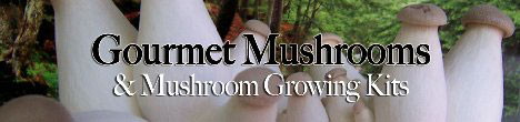Gourmet Mushrooms Growing Kits