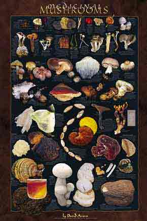 Medicinal Mushrooms Poster